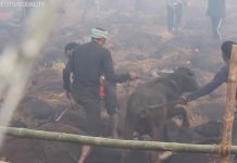 Festiwal Gadhimai. Foto: YouTube/Animal Equality